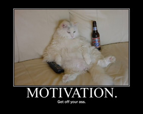 cat motivation