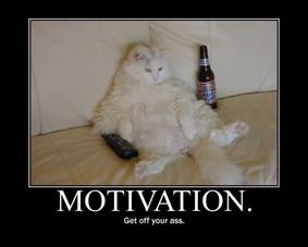 cat motivation