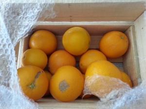 Oranges Oranges Oranges!